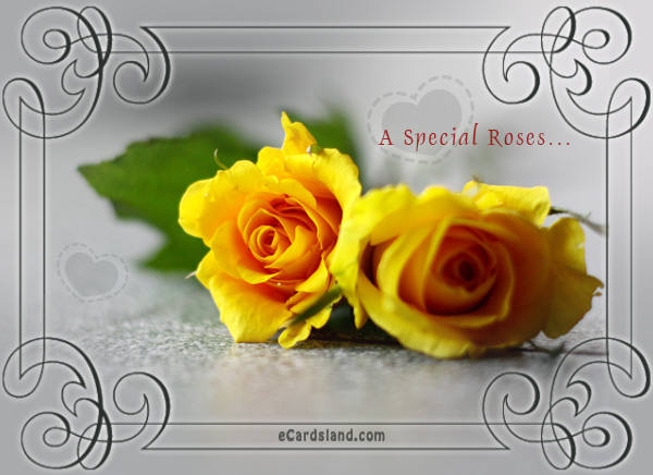 A Special Roses