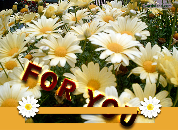 Message in Flowers