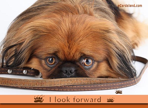 I Look Forward