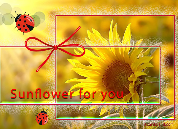 Sunflower for You