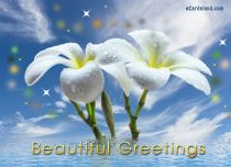 Free eCards, Flowers ecards free - Beautiful Greetings,