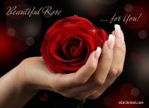 eCards Flowers Beautiful Rose for You, Beautiful Rose for You