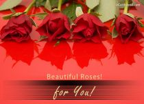 eCards  Beautiful Roses for You,