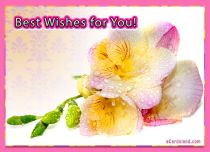 eCards Flowers Best Wishes for You, Best Wishes for You