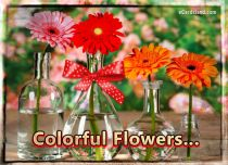 eCards Flowers Colorful Flowers, Colorful Flowers