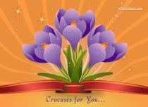 eCards Flowers Crocuses for You, Crocuses for You