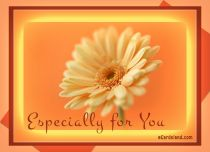 eCards Flowers Especially for You, Especially for You