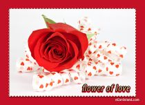eCards  Flower of Love,