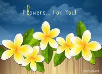 eCards  Flowers eCard,