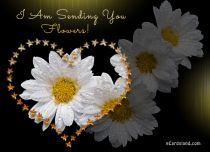 eCards Flowers I Am Sending You Flowers, I Am Sending You Flowers