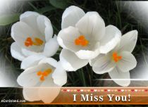 eCards Flowers I Miss You, I Miss You