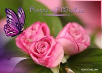 Free eCards - Roses of Wishes,