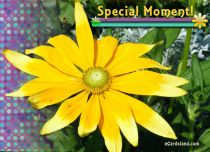 eCards Flowers Special Moment, Special Moment