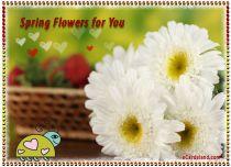 eCards Flowers Spring Flowers eCard, Spring Flowers eCard