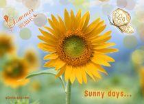 eCards Flowers Sunny Days, Sunny Days