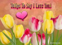 eCards Flowers Tulips To Say I Love You, Tulips To Say I Love You