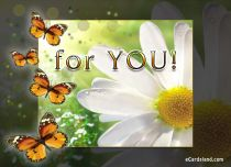Free eCards, Flowers ecards free - White Flower for You,