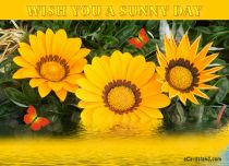 eCards Flowers Wish You a Sunny Day, Wish You a Sunny Day