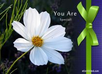 Free eCards, Flowers ecards free - You Are Special,