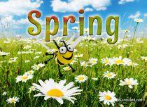 eCards Flowers Spring, Spring