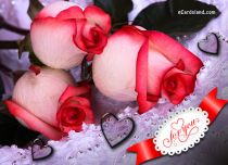eCards Valentine's Day  Roses of Love, Roses of Love