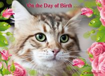 Free eCards - Birthday Cat,