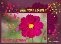 eCards Birthday Birthday Flower, Birthday Flower