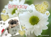 eCards  Birthday Greetings,