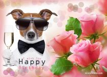 Free eCards, Happy Birthday cards - Happy Birthday,