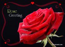 eCards Birthday Rose Greeting eCard, Rose Greeting eCard