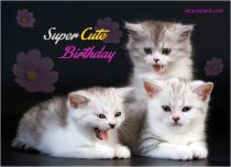 Free eCards - Super Cute Birthday,