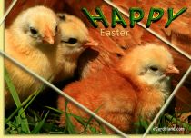 eCards Easter Adorable Baby Chicks, Adorable Baby Chicks