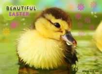 Free eCards, Easter e-cards - Beautiful Easter,