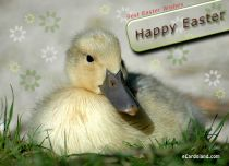 eCards  Best Easter Wishes,