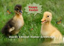 eCards Easter Ducks Consist Easter Greetings, Ducks Consist Easter Greetings