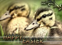 eCards  Easter Ducks Greeting,