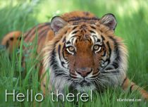 Free eCards, Animals cards messages - Hello there,