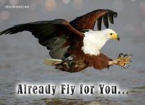 eCards Animals Already Fly for You, Already Fly for You