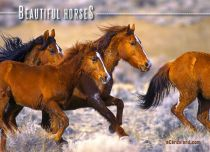Free eCards, Animals cards messages - Beautiful Horses,