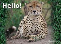 eCards Animals Hello, Hello