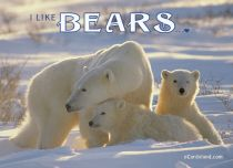 Free eCards, Animals cards messages - I Like Bears,