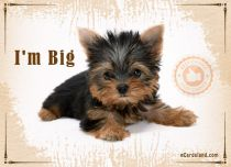 Free eCards, Animals cards messages - I'm Big,
