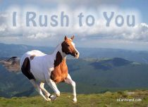 Free eCards, Animals cards messages - I Rush to You,