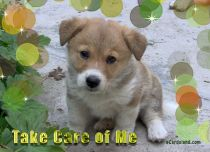 Free eCards, Animals cards messages - Take Care of Me,