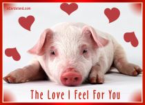 eCards Animals The Love I Feel For You, The Love I Feel For You