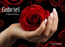 eCards  Rose Greeting Card,