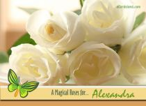 eCards Name Day - Women A Magical Roses, A Magical Roses