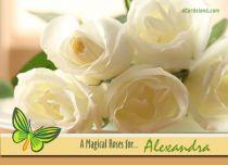 eCards  A Magical Roses,