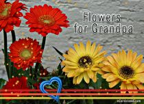 Free eCards, Funny Grandparents Day card - Flowers for Grandpa,