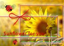 Free eCards Seasons - Sunflower for You,